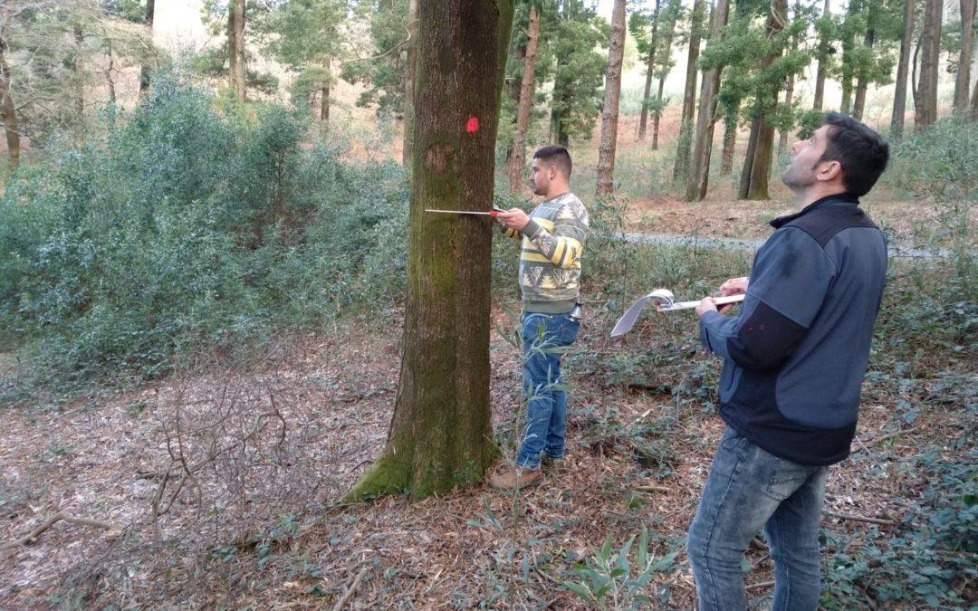 Los profesionales del sector forestal gallego ensayan técnicas para la realización de inventarios forestales