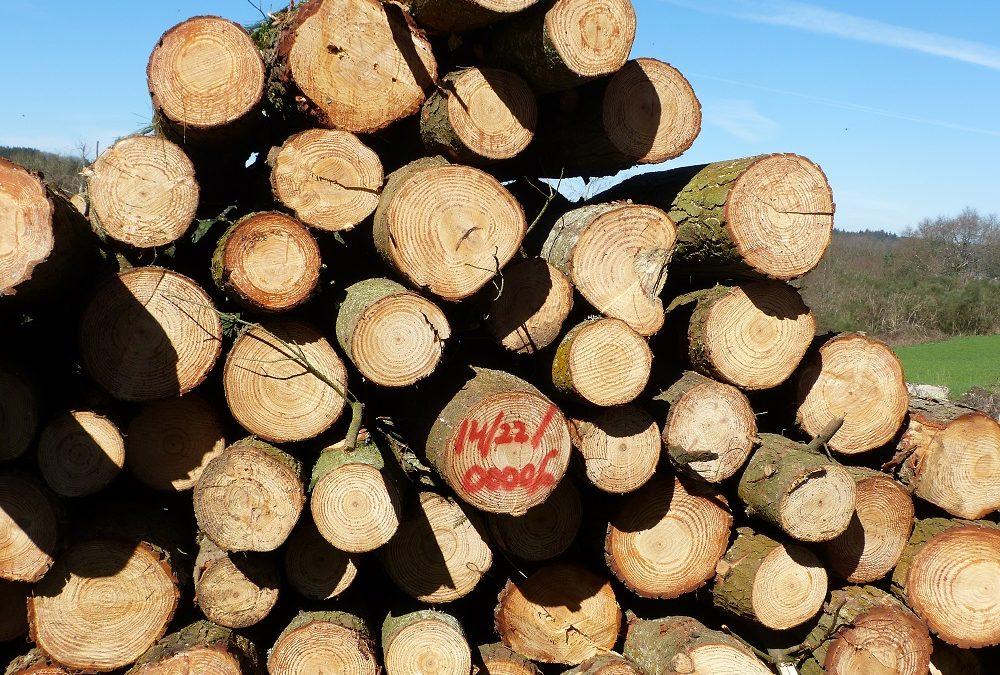 La Gestión Forestal Sostenible avanza en Galicia