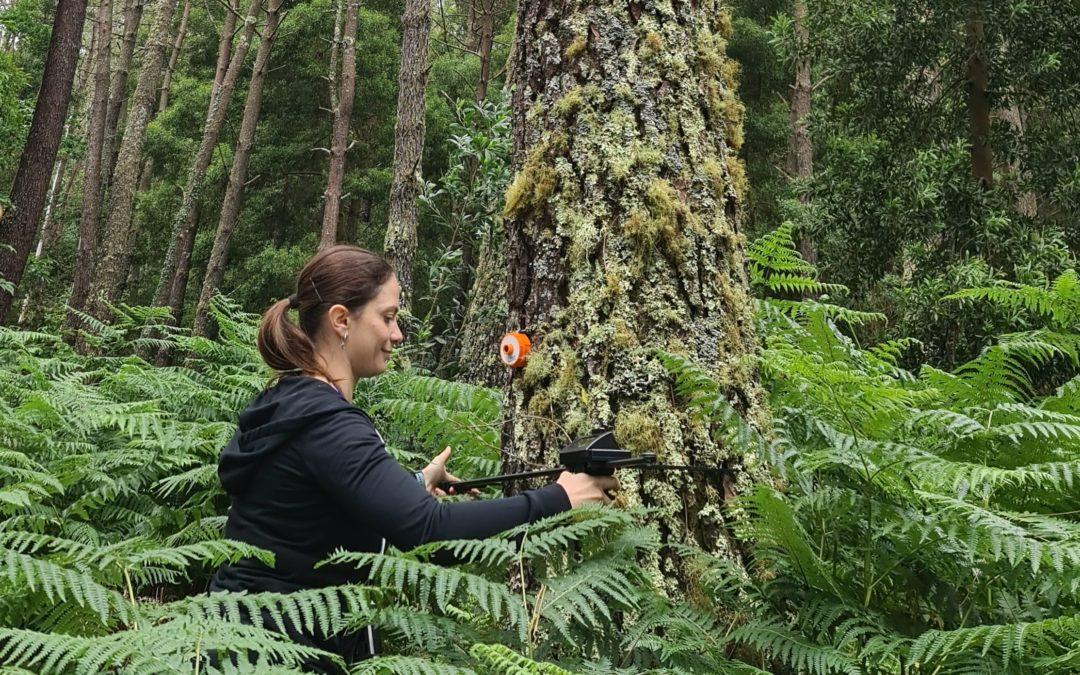 A xestión forestal sustentable é rendible e representa unha oportunidade laboral para a xente nova no rural